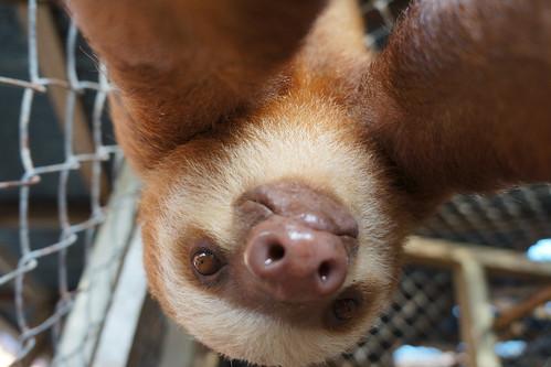 slothselfportrait