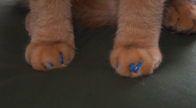 Beso's Blue Claws