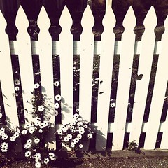 Solvang #fence #flower #solvang #instagram #iphone