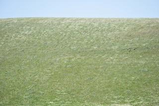 Dunnigan Hills grasslands