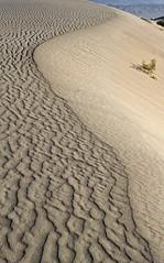 Wind Ripples at Mesquite Dunes