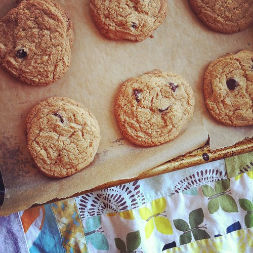 113/366 :: whole wheat chocolate chip cookies