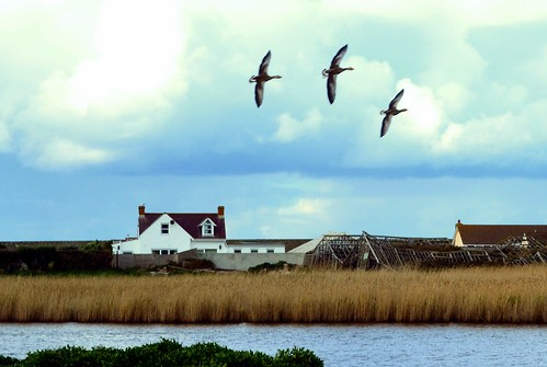 greatbritain birds flying naturereserve channelislands laclairemare