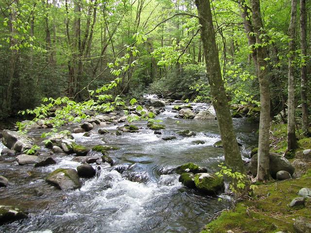 IMG_4932_Porters_Creek