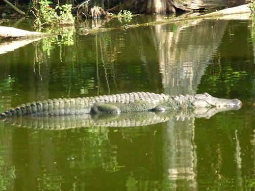 gary-scott swamp tags:
