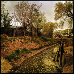 elm seeds in the irrigation ditch