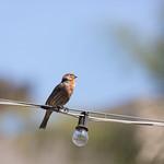 bird and bulb, Balboa Park