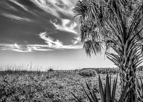 tree beach clouds pier unitedstates florida palm cocoa cocoabeach