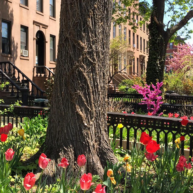 Definitely Spring - Carroll Gardens