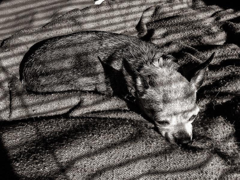 Betty Sunbathing B&W