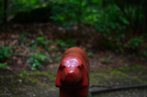 Tannenwalds Tierwelt 11
