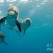 Bimini – delfínům vstříc, foto: Atmoji ©WildQuest
