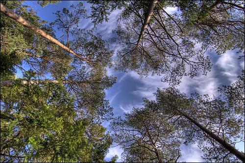 sky tree clouds nikon himmel hdr highdynamicrange träd svartedalen moln d90 översjön nikond90