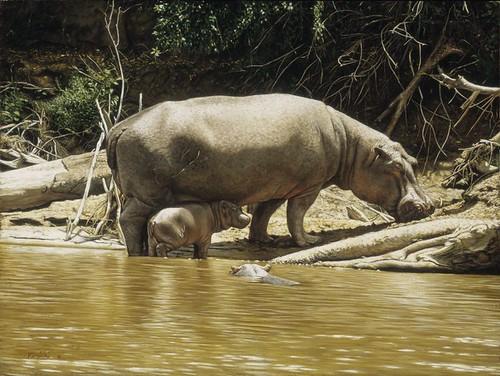 "'Hippos' oil on board 12"" x 16¼"""
