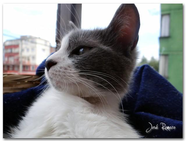 Salomé 07MAR2012
