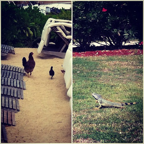 Local wildlife. (grand cayman)