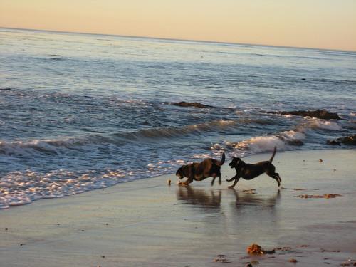 jake and maisie beach