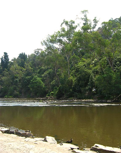 Warrandyte - Yarra River 1