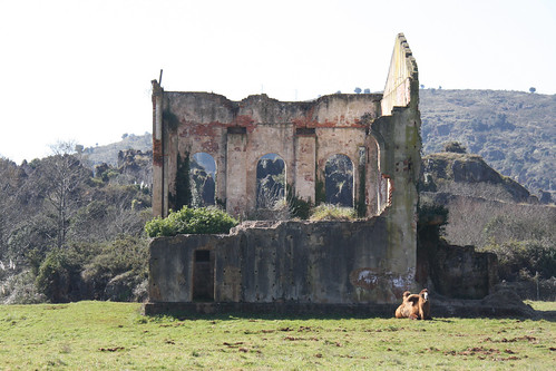 Camel and Ruin