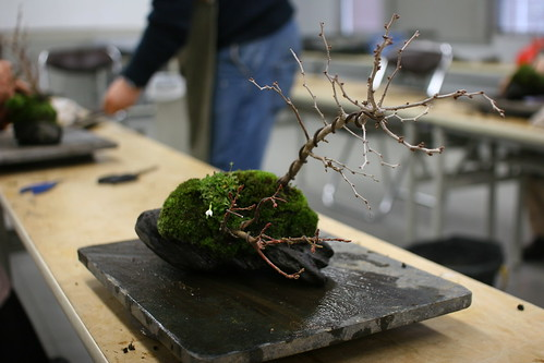 Bonsai terminado II