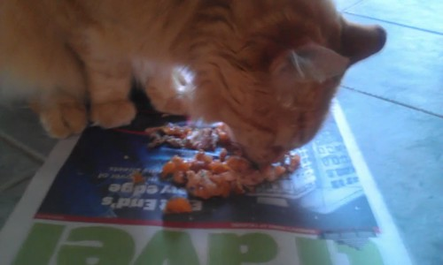 Neko eating as though it was the first time in 2 weeks