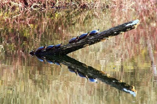 wildlife reflexions picnik flickryes2012