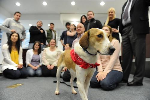 Daniel The Beagle at Seton Hall