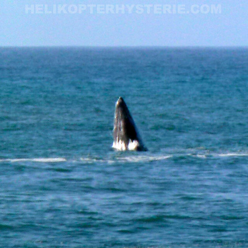 http://www.helikopterhysterie.com/2012/02/humpback-whale.html