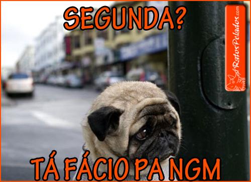 internet-memes-the-saddest-pug-in-the-world
