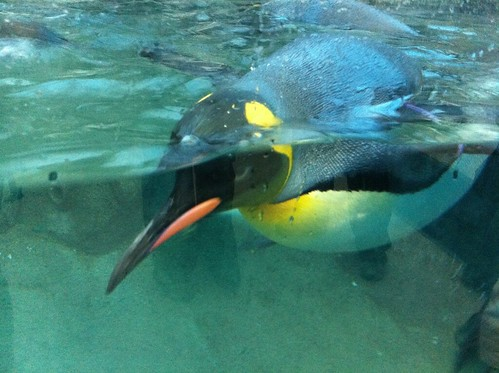 Kids In Calgary: Penguin Plunge At The Calgary Zoo