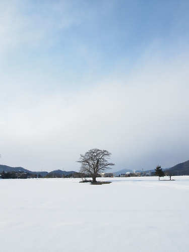 Tree in the snow field