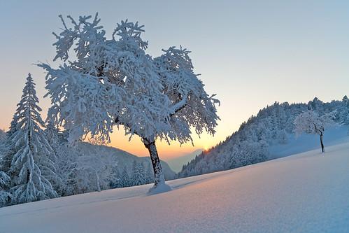 sunset snow night zeiss austria österreich ze vorarlberg götzis distagont2821 millrütte