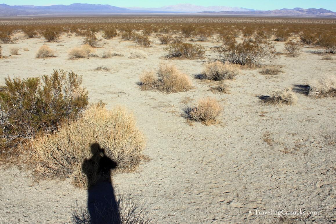 Desert Plains, Joshua Tree