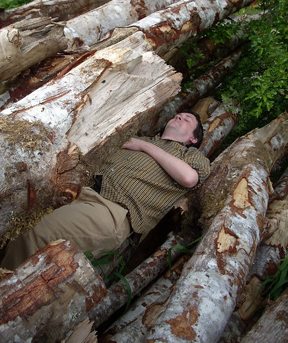Laying with Logs