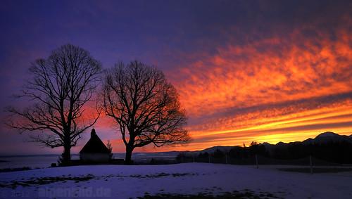 morning trees red sky orange tree rot contrast bayern bavaria dawn purple himmel chapel kontrast bäume sonnenaufgang morgen baum chiemsee kapelle purpur bernau 巴伐利亚 chiemgau runrise hittenkirchen alpenbildde