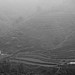 Terraced paddy fields in the mist - Cat Cat, Vietnam
