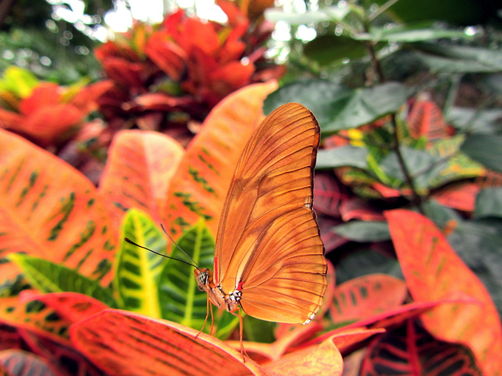 """Camouflage butterfly 