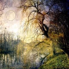 ✿ Willow under moon ✿