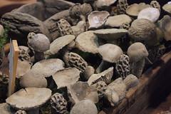 mushroom ceramic at Lichen & Moss