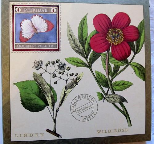 Posta Botanica-Wild Rose