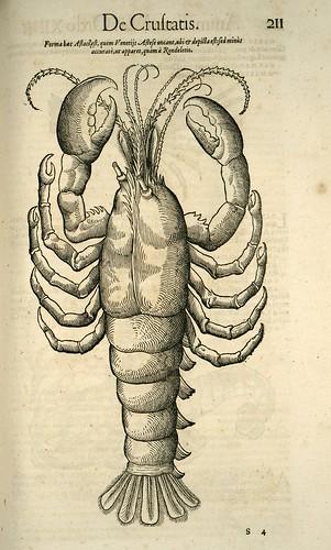 014-Langosta-Icones animalium- (1553)- Conrad  Gesner- SICD Strasbourg