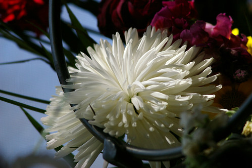 memorial flowers, through the hoop, a camel reference