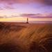 Through the Sea Grass ...... by jon9600