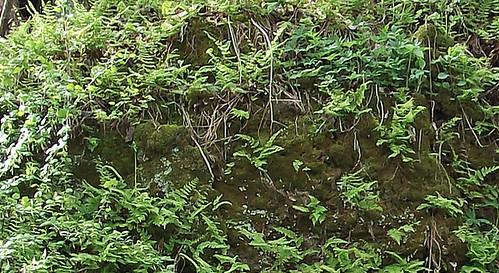 1678 ferns moss