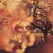 Amor by Seanen Middleton