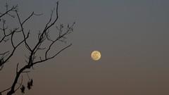 Mason Neck Wildlife Refuge Moonrise