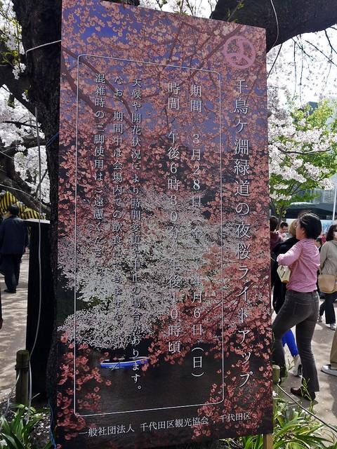 Sakura 2014 Chidorigafuchi Ryukudo