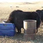 Transsibérien - Mongolie - Jour 3