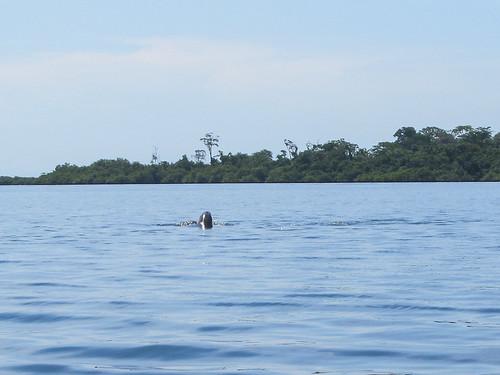 Bahia de los Dolfines