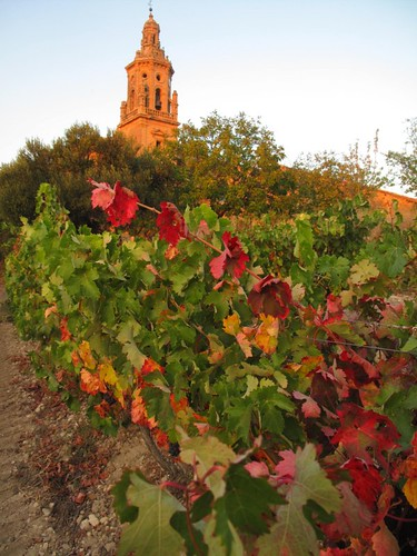 The church and the vines